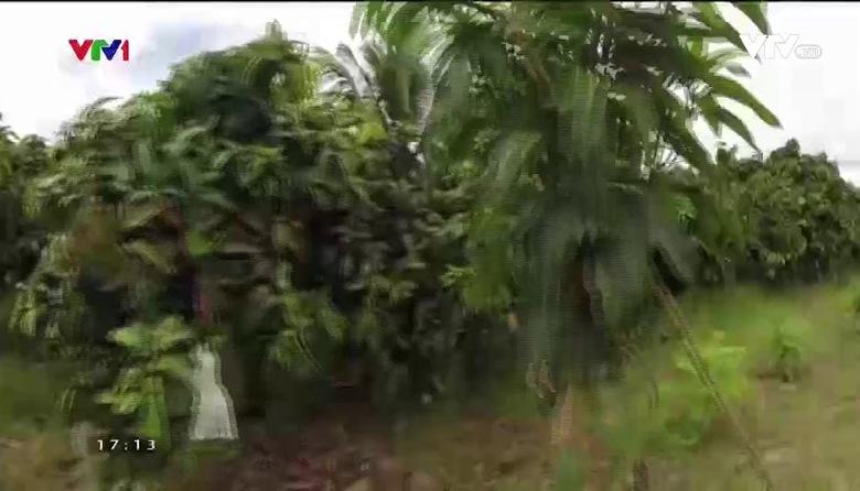 Khám phá Việt Nam: Cù Lao Giêng