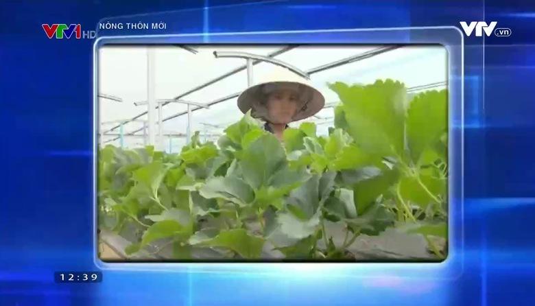 Nông thôn mới: Phát triển nông nghiệp công nghệ cao đúng hướng