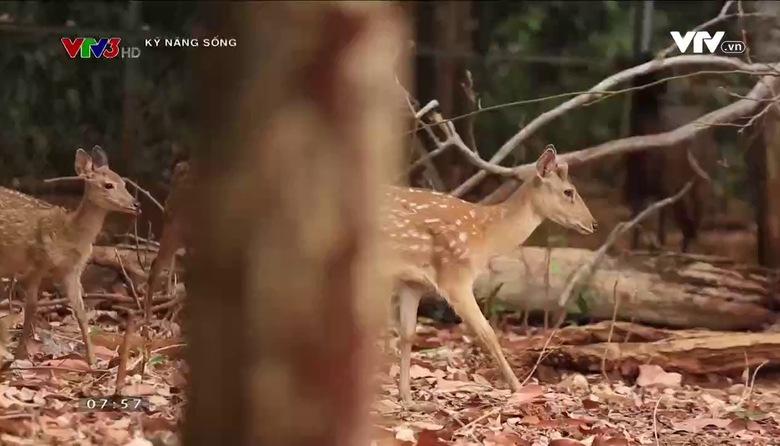 Kỹ năng sống: Kỹ năng khi bị lạc trong rừng