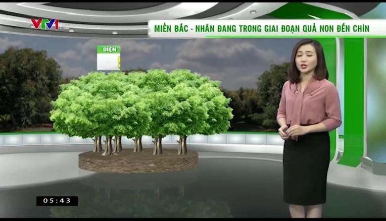 Bản tin thời tiết nông vụ - 30/5/2017