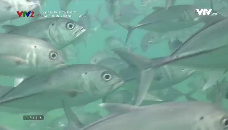 Khám phá thế giới: Đại dương xanh - Tập 2
