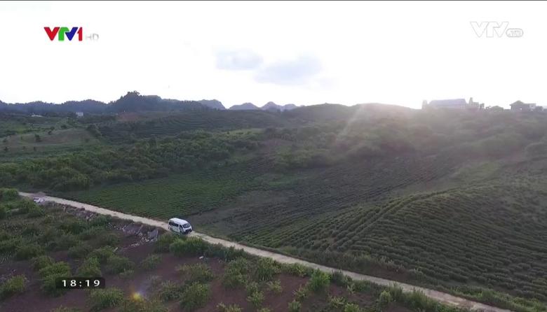 Nông nghiệp sạch: Thanh long ruột đỏ sản phẩm nông nghiệp tỉnh Sơn La