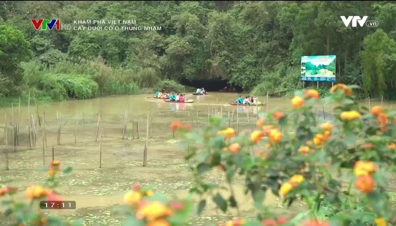 Khám phá Việt Nam: Cây duối cổ ở Thung Nham