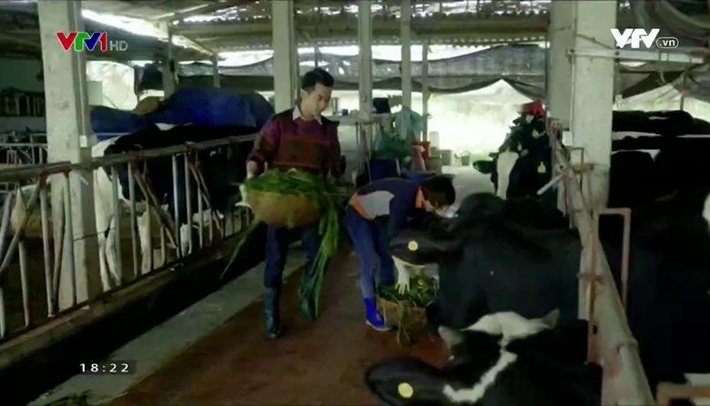 Nông nghiệp sạch: Sữa Trác Văn sản phẩm nông nghiệp tỉnh Hà Nam