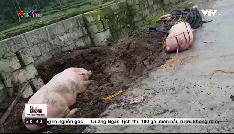 Nói không với thực phẩm bẩn (20h40) - 23/3/2017