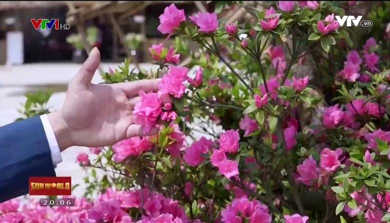 """S - Việt Nam: """"Vương quốc"""" hoa đỗ quyên"""
