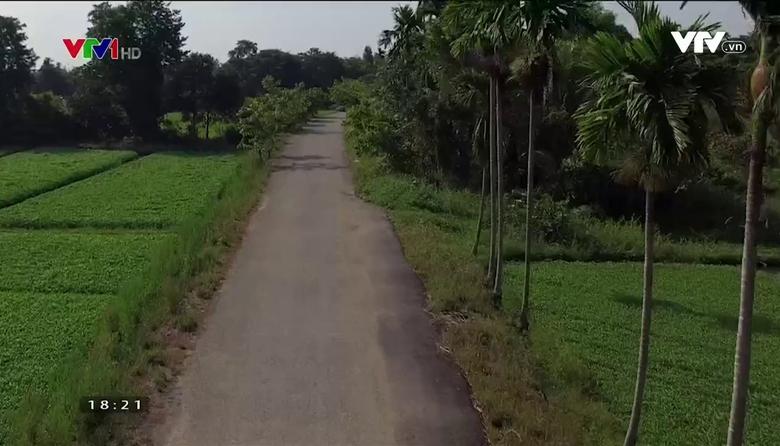 Nông nghiệp sạch: Rau muống nước Nhị Bình sản phẩm nông nghiệp thành phố Hồ Chí Minh