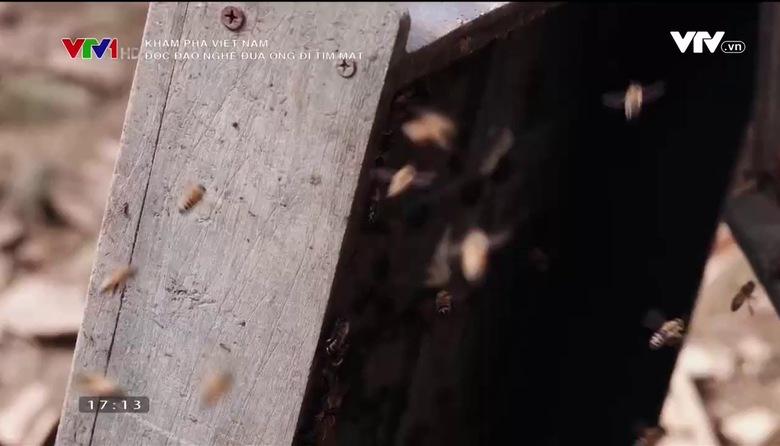 Khám phá Việt Nam: Độc đáo nghề đưa ong đi tìm mật