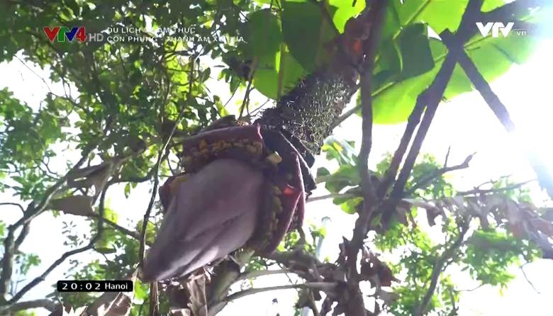 Du lịch và Ẩm thực: Cồn Phụng - Thanh âm xứ dừa