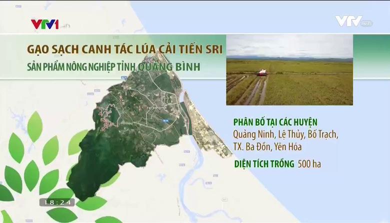 Nông nghiệp sạch: Gạo sạch canh tác lúa cải tiến Sri sản phẩm nông nghiệp tỉnh Quảng Bình