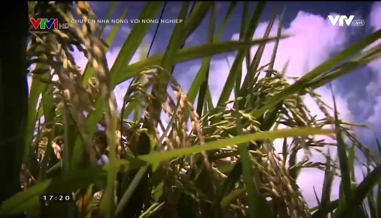 Chuyện nhà nông với nông nghiệp: Đầu tư công nghệ cao vào nông nghiệp tại Long An