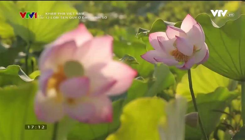 Khám phá Việt Nam: 12 loại sen quý ở đầm Ninh Sở