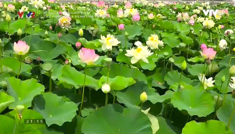 Vì sức khỏe người Việt: Tác dụng chữa bệnh của cây hoa sen
