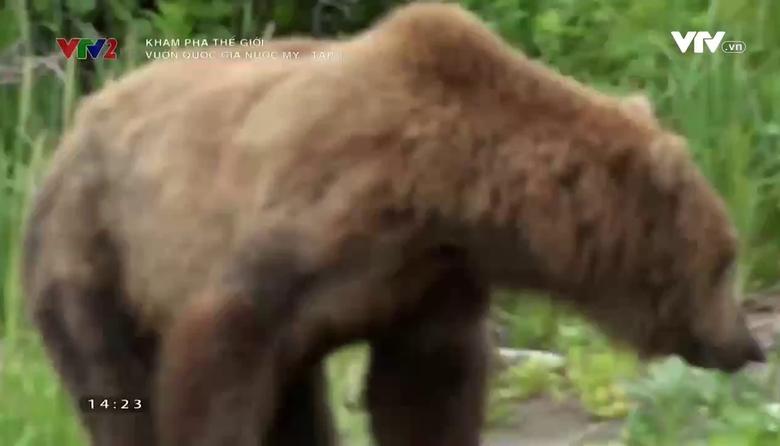 Khám phá thế giới: Vườn quốc gia nước Mỹ - Tập 1