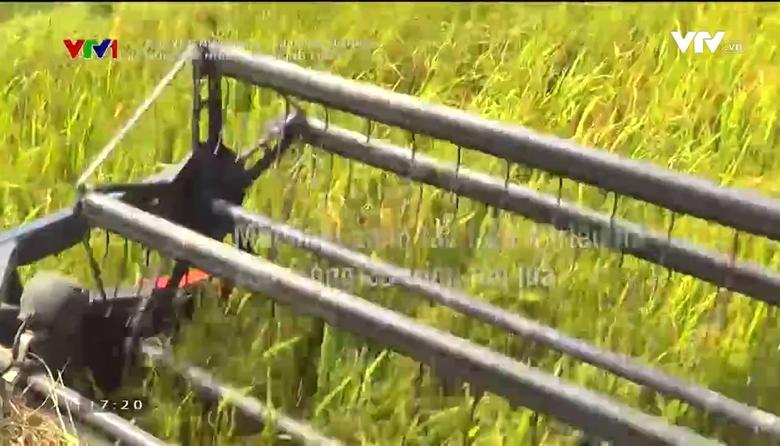 Chuyện nhà nông với nông nghiệp:  Nông hộ nhỏ cánh đồng lớn
