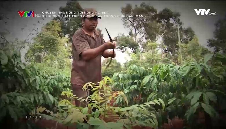 Chuyện nhà nông với nông nghiệp: Xu hướng phát triển giống cây trồng chịu hạn, mặn