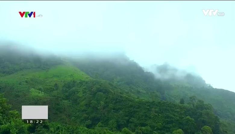 Nông nghiệp sạch: Chè Shan Tuyết suối Giàng sản phẩm nông nghiệp tỉnh Yên Bái