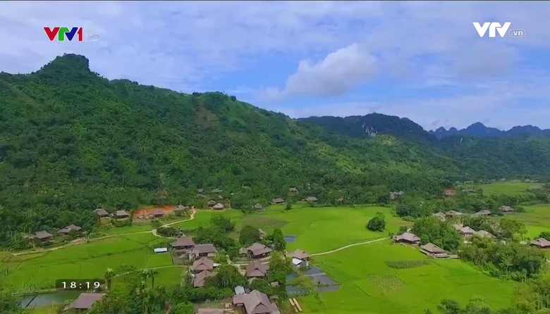 Nông nghiệp sạch: Măng mai sản phẩm nông nghiệp tỉnh Yên Bái