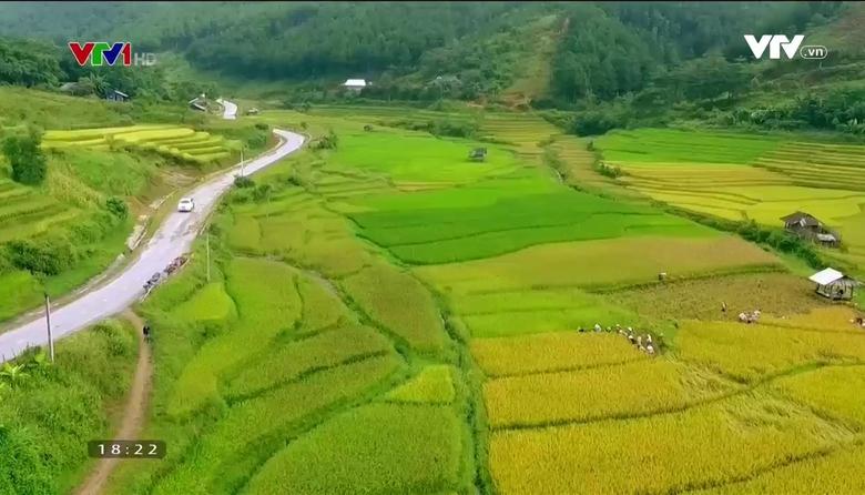 Nông nghiệp sạch: Nếp Tú Lệ sản phẩm nông nghiệp tỉnh Yên Bái