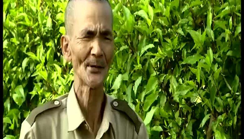 Việt Nam xanh: Rừng phòng hộ ven biển Đông Bắc bộ