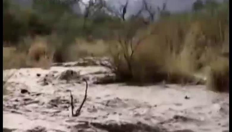 Mười vạn câu hỏi vì sao: Khám phá sa mạc Châu Mỹ - Phần 2