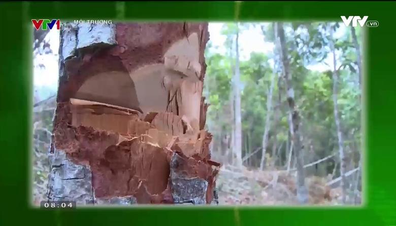 """Môi trường: Một năm """"Đóng cửa rừng tự nhiên"""""""