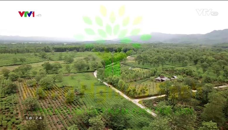 Nông nghiệp sạch: Chè Hà Tĩnh sản phẩm nông nghiệp tỉnh Hà Tĩnh