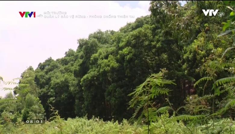 Môi trường: Quản lý bảo vệ rừng - phòng chống thiên tai