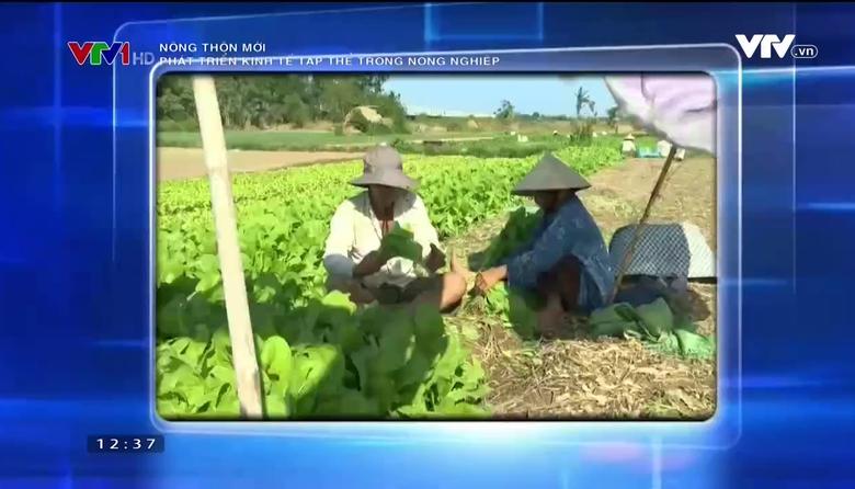 Nông thôn mới: Phát triển kinh tế tập thể trong nông nghiệp