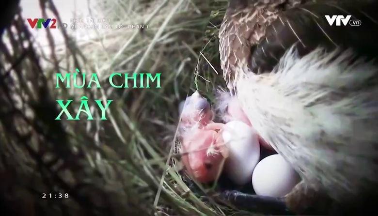 Phim tài liệu : Mùa chim làm tổ - Phần 1