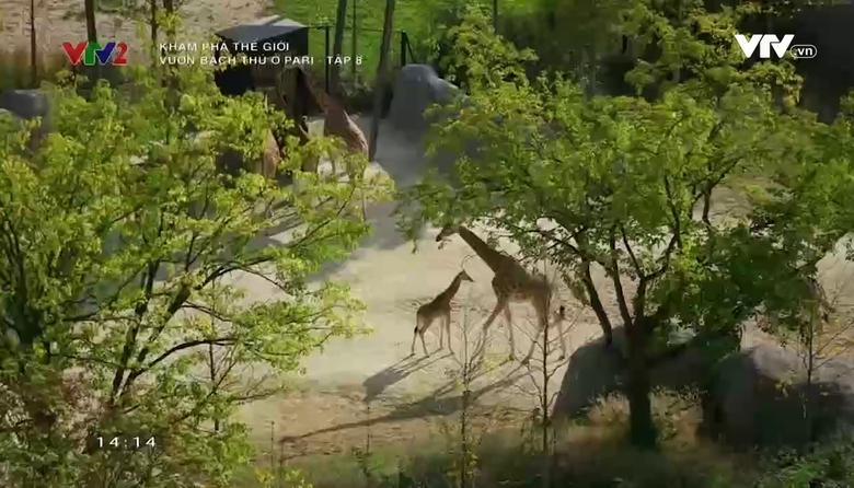 Khám phá thế giới: Vườn bách thú ở Paris - Tập 8