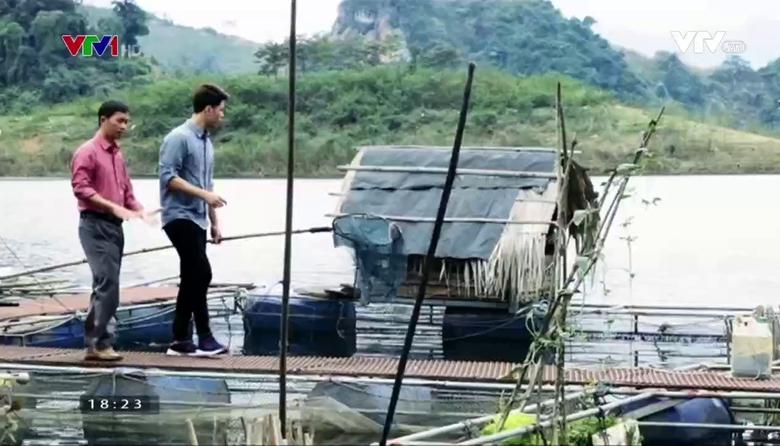 Nông nghiệp sạch: Cá lồng sản phẩm nông nghiệp tỉnh Tuyên Quang