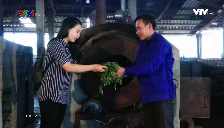 Nông nghiệp sạch: Chè chất lượng cao Bảo Yên sản phẩm nông nghiệp Lào Cao