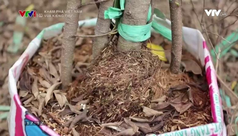 Khám phá Việt Nam: Vua kiểng thú