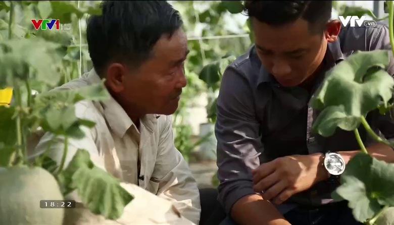 Nông nghiệp sạch: Dưa lưới sản phẩm nông nghiệp TP.Hồ Chí Minh