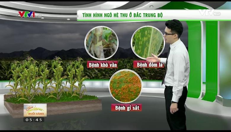 Bản tin thời tiết nông vụ - 24/8/2017