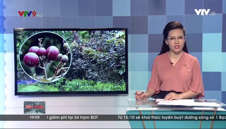 Tin tức 10h VTV9 - 25/9/2017
